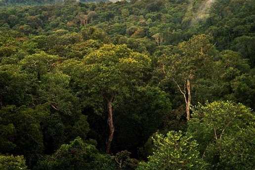 Researchers say that planting new trees, as well as protecting existing forests -- such as the Amazon basin forest north of Manaus, Brazil -- is much more expensive than had previously been thought. Photo by Phil P. Harris/Wikimedia