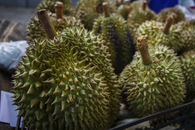 A driver and one other person in a truck on Penang Island, Malaysia, were reportedly injured by flying durian fruit last week. File Photo by Diego Azubel/EPA-EFE