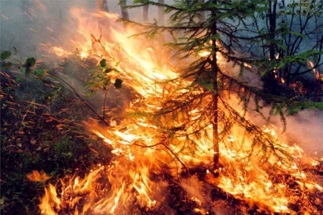 10,000 People Fight Widespread Siberia Wildfires, Emergency Ministry Says