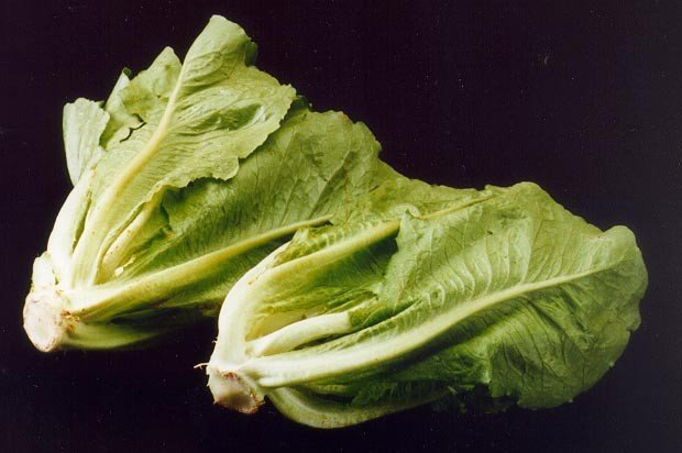 The CDC reports that the E. coli outbreak connected to Romaine lettuce has spread to 29 states and 149 cases have been reported. Photo by Agricultural Research Service/USDA