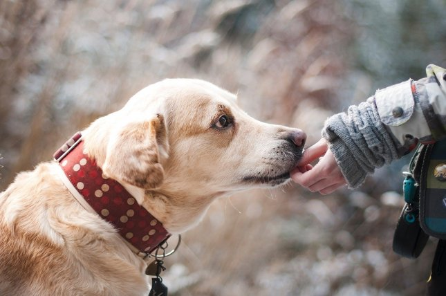 Dogs are born biologically prepared to communicate with humans, though it varies based on the genetics of individual dogs, according to new research. Photo by Lepale/Pixabay