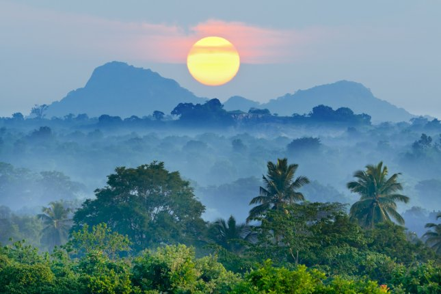 Dietary changes could help save large swaths of tropical forest. File Photo by Sergieiev/Shutterstock