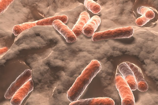 A new study found that part of the way stool transplants treat C. diff infections is by reversing the suppression of mRNA that produce proteins to protect the bowel walls. File Photo by Juan Gaertner/Shutterstock