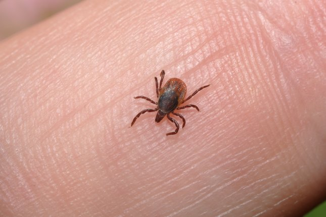 Researchers in Austria are studying the adhesive substance secreted by ticks with hopes of replicating the cement for use in various medical procedures. File photo by Roman Prokhorov/Shutterstock