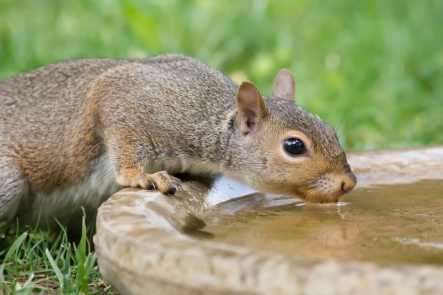 New research suggests squirrels have personalities, and bolder, more social individuals hold an advantage over their peers. File photo by Sharon Day/Shutterstock