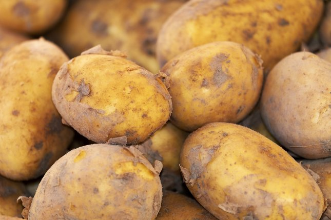 Researchers say that a breakthrough in RNA gene manipulation in some crops -- including potatoes -- could lead to an increase in yield by as much as 50%. Photo by Couleur/Pixabay