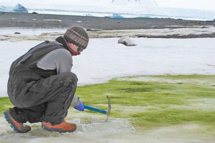 Cambridge University researcher Matt Davey samples green snow algae on Lagoon Island in Antarctica. Photo by Sarah Vincent