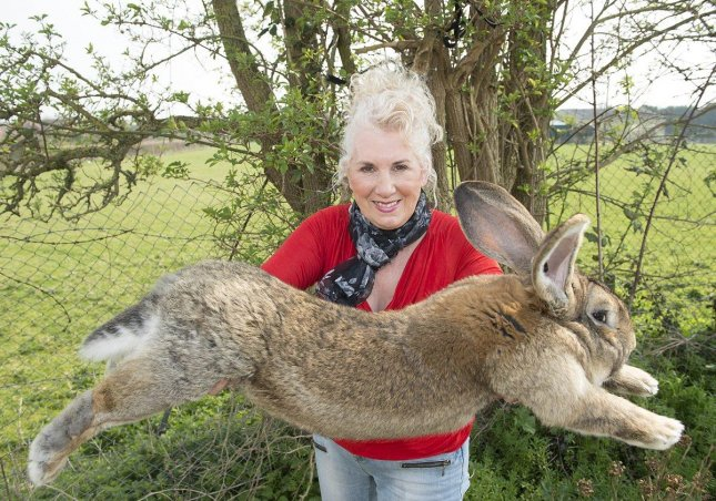 Airline says giant rabbit was alive on landing