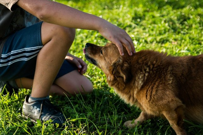 New research shows that children and their dogs don't just like each other -- they're actually in sync, to a certain extent. Photo by jarmoluk/Pixabay