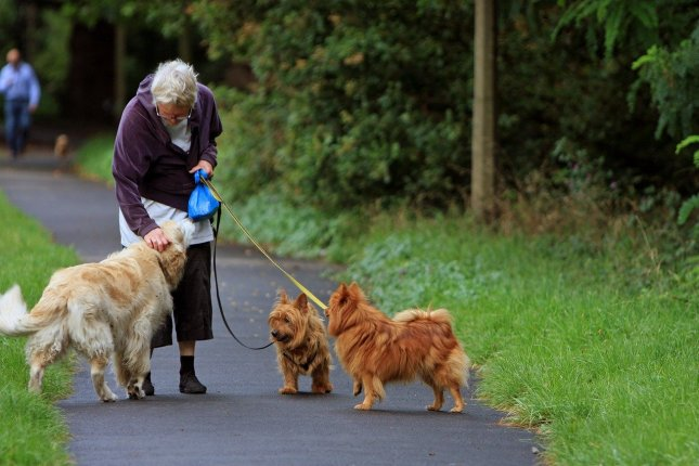 More than one-third of seniors in a recent survey said they were actively suicidal or significantly traumatized, but their pets gave them a reason to live. Photo by Kaz/Pixabay