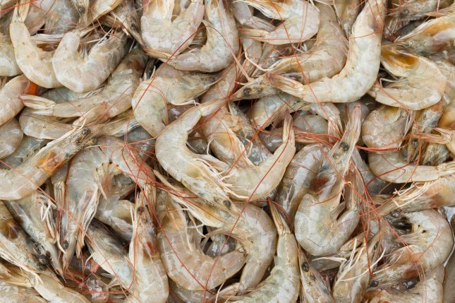 Researchers have developed a new plastic polymer using a derivative of glucose found in the exoskeletons of arthropods like shrimp. Photo by Thawornnurak/Shutterstock