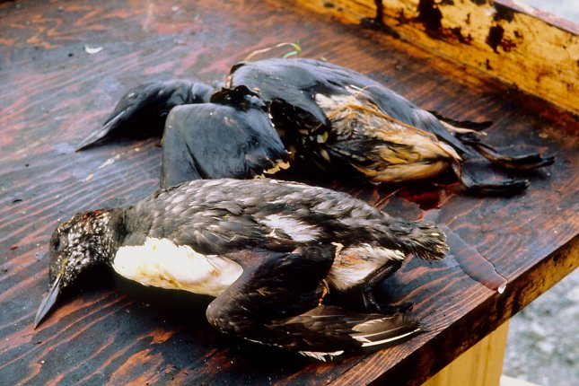 On September 16, 1994, a U.S. federal court jury in Anchorage, Alaska, ordered Exxon to pay $5 billion to the fishermen and natives whose lives were affected by the Exxon Valdez oil spill in 1989. File Photo courtesy of the Exxon Valdez Oil Spill Trustee Council