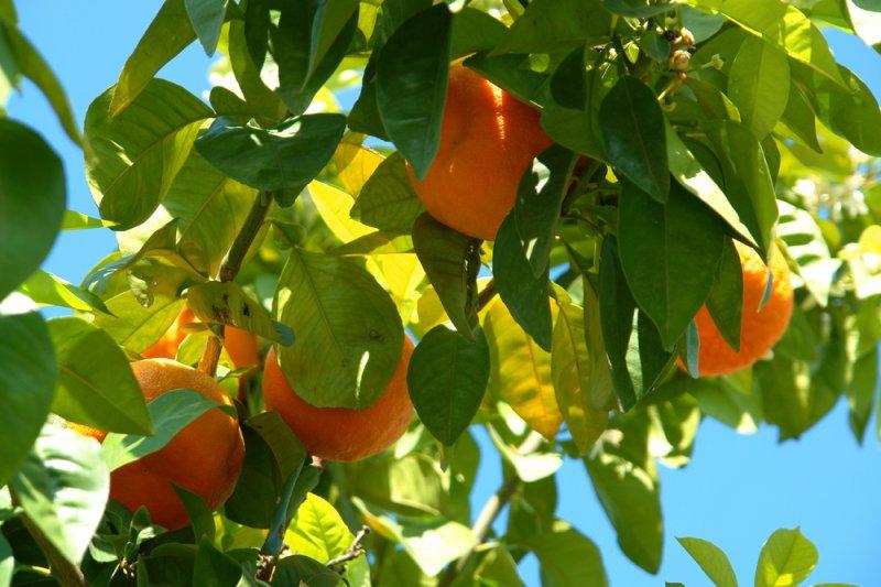 Orange peels to combat mercury contamination