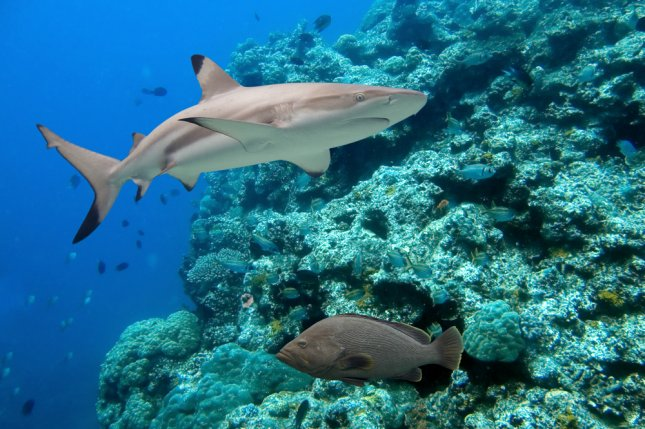 Current efforts to save coral reefs are insufficient, report finds