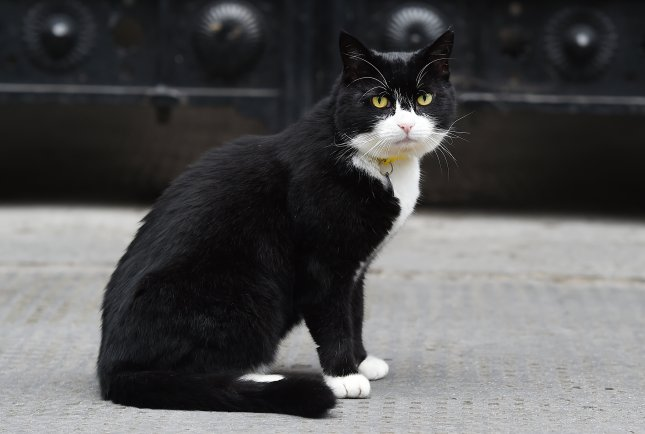 Palmerston the Foreign Office cat at Downing Street in London. Palmerston has surpassed fellow Downing Street cat, Larry, by catching at least 27 mice since he arrived last year. Photo by Andy Rain/EPA