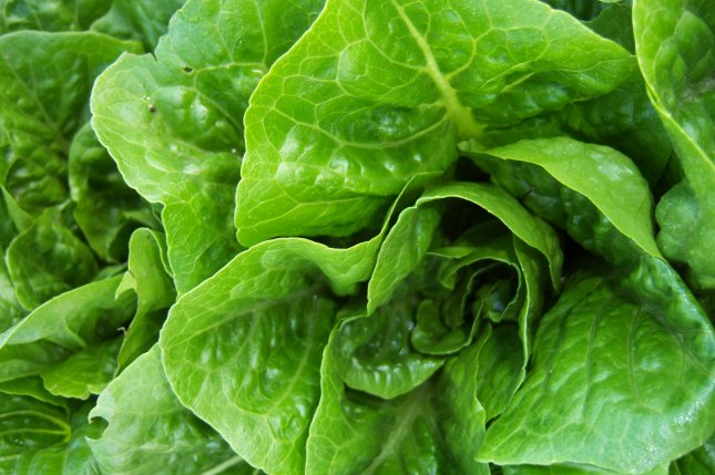 Nearly 100 sick as romaine lettuce-linked E. coli outbreak continues