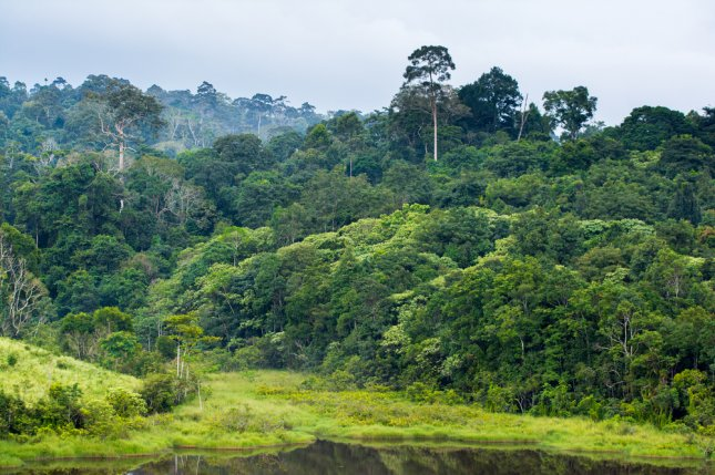 Using a new model, researchers determined annual carbon emissions along forest edges increased by 30 million tons between 2000 and 2010 -- and they don't expect emissions rates to let up any time soon, even if deforestation and fragmentation slow. File Photo by sittitap/Shutterstock