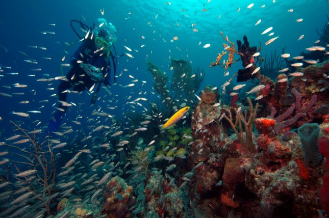 Marine reserves are especially important for reefs near large human populations. Photo by Norm Diver/Shutterstock