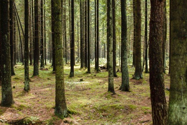 New research suggests larger trees are more susceptible to drought. Photo by UPI/Shutterstock/Shebeko
