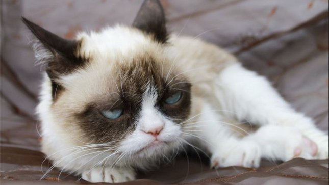 Tardar Sauce, a.k.a. Grumpy Cat, is one of the most famous felines on the Internet. (Facebook/Grumpy Cat)
