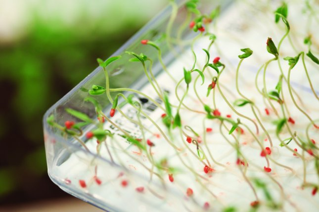 Bayer is funding the startup of a new company, Unfold, to develop new seeds for indoor farming, like these tomato seeds sprouting at a Bayer vegetable research and development facility. Photo courtesy of Bayer