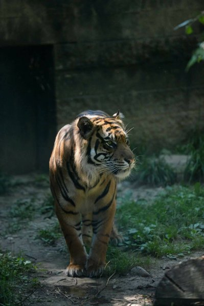 Sumatran tiger attacks zookeeper in Kansas