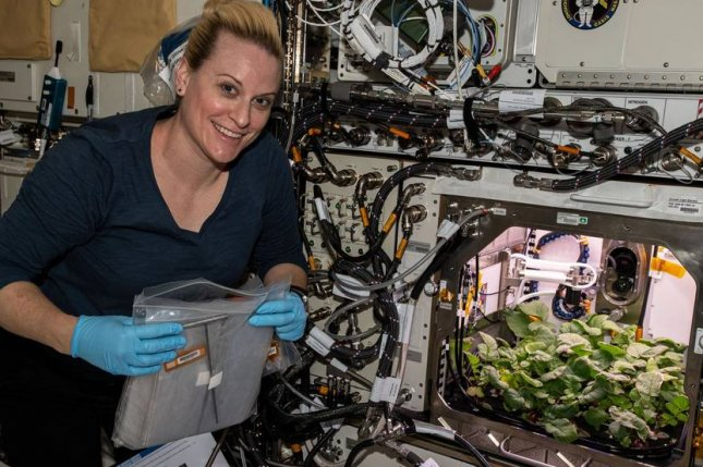 Astronaut Kate Rubins harvests radishes Wednesday aboard the International Space Station. Photo courtesy of NASA