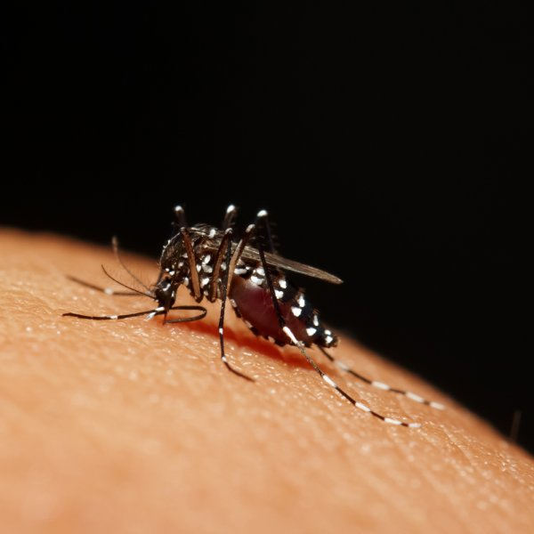 A malaria outbreak, spread by mosquitoes, in Greece prompted the ban of blood donations in 12 municipalities. Photo by Kitsadakron Photography/Shutterstock/UPI