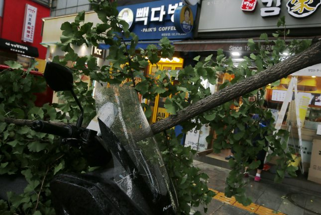 A tree was knocked down by Typhoon Lingling in Seoul, South Korea, on Saturday. Photo by Kim Hee-Chul/EPA