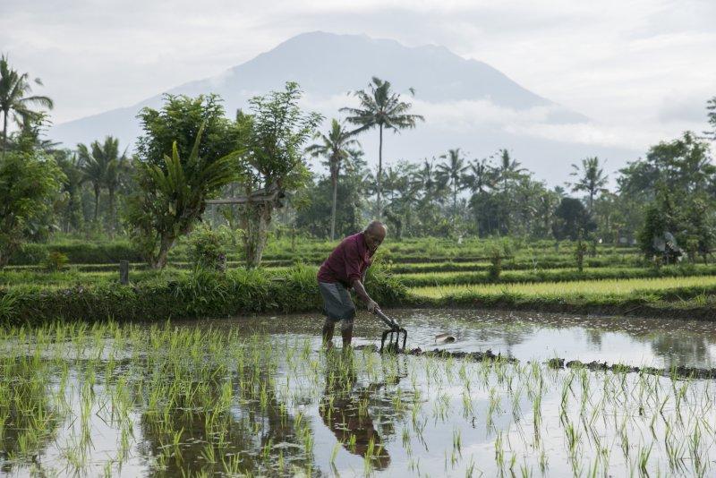 35,000 flee amid fears of volcano's eruption in Bali - UPI.com