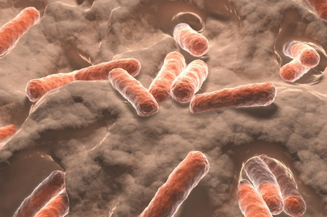 Researchers discovered the development of neurodegenerative diseases may stem from the proteins created by gut bacteria. Photo by Juan Gaertner/Shutterstock