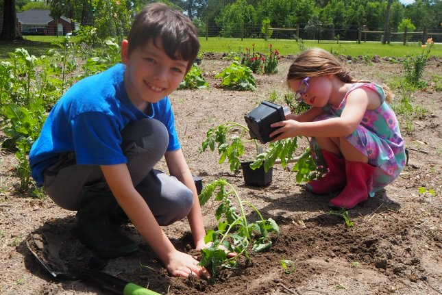 Nate and Josie Harlow, ages 7 and 4, respectively, plant tomatoes in their family victory garden near Lake City, Fla. Photo courtesy of Erin Harlow/University of Florida
