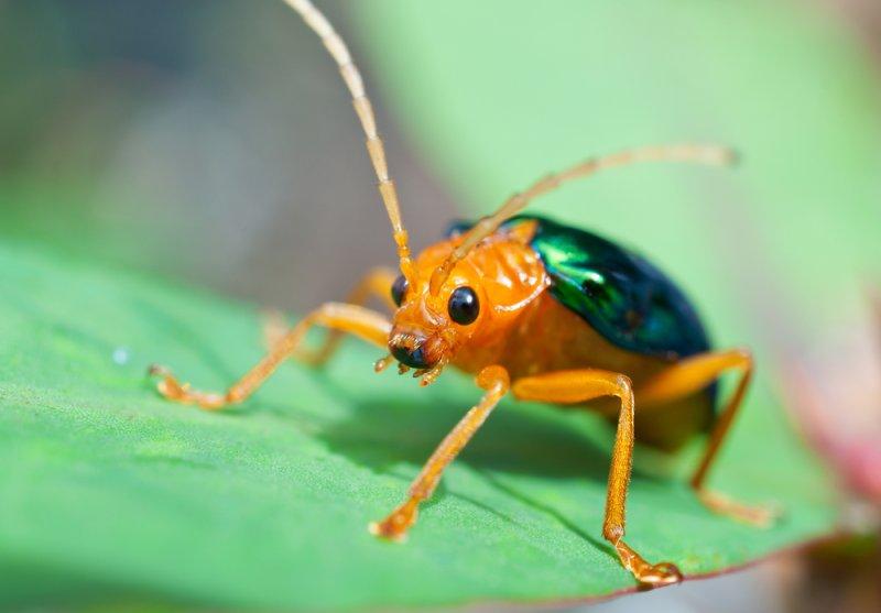 Bombardier beetle defense - photo#6