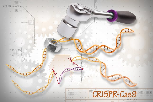 Researchers say that lab tests show the CRISPR gene editing method can result in destruction of part of whole chromosomes in DNA, which may affect the development of human embryos. Photo by Genome.gov