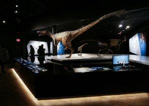 T  Rex News | Photos | Wiki - UPI com