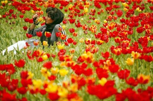 Iranians visit colorful tulip garden in Gachsar