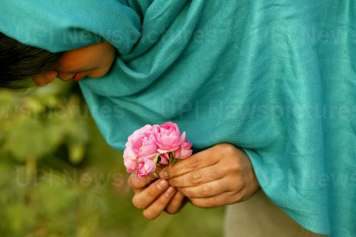 Process of making Rose Water in Iran
