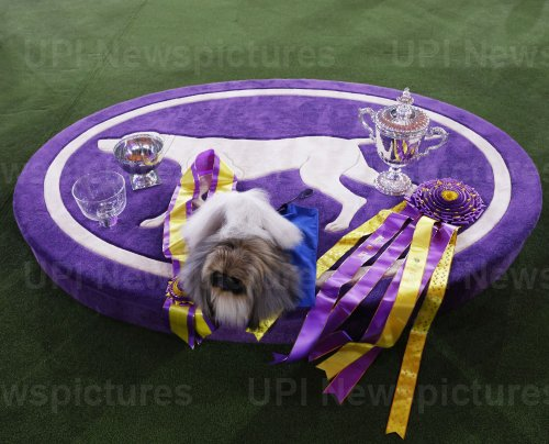 The Pekingese Wins Best In Show at Westminster Dog Show