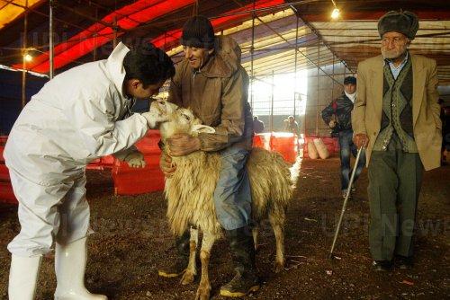 Iran prepares for Eid al-Adha